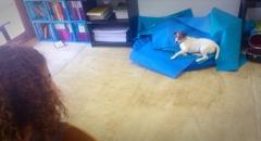 Regular classroom companion, Luc